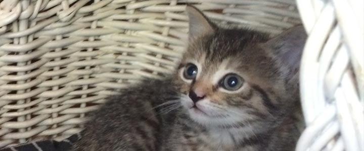 Dierenvrienden kunnen een kitten of kat kopen en aanbieden. | 720 x 300 jpeg 31kB
